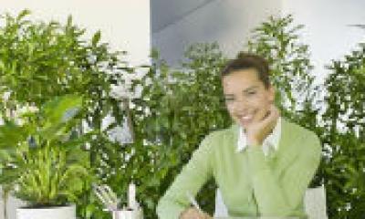 Piante Ufficio Stress : Verde in ufficio e produttività segretaria virtuale